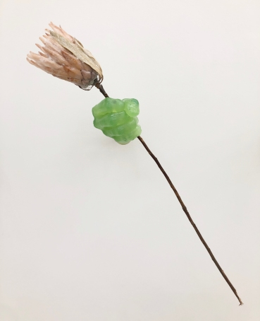 Alix Marie, Proteus offering, Glasswax and Protea flower, 2021